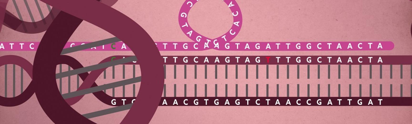 fixing gene 1 resized